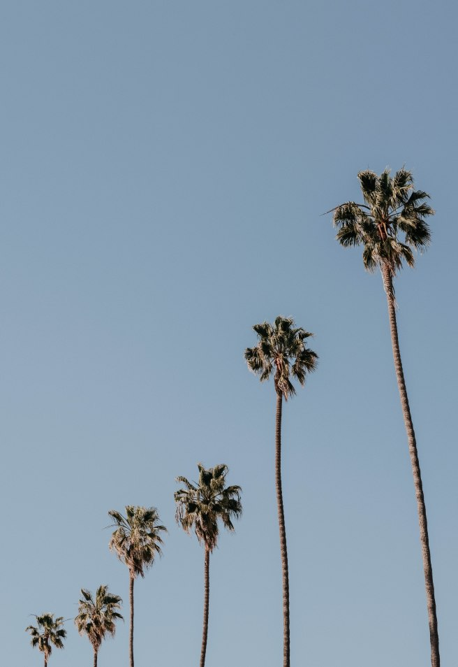 palm trees (1 of 1)